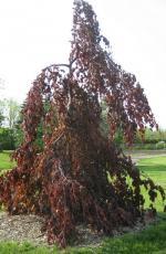Trees/Shrubs - Top Ten Problems