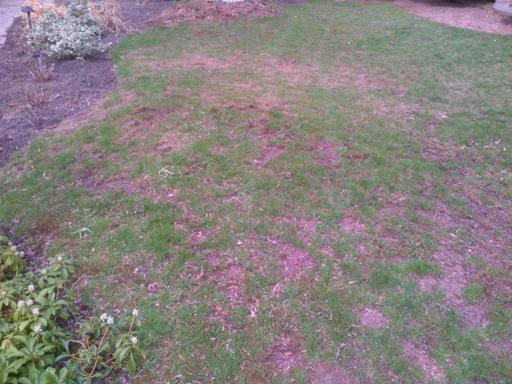 Leather jacket damage - Leatherjacket Lawn Damage