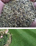 Turf King Triple Crown Seed and Feed from the Lawn Care Experts