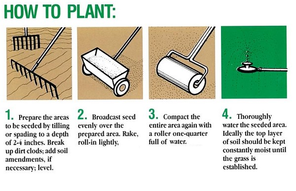 How to seed a lawn by Turf King