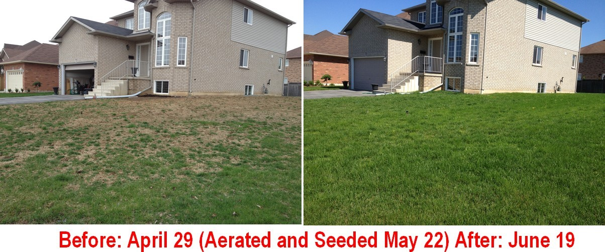 Aerate & overseed to thicken your lawn